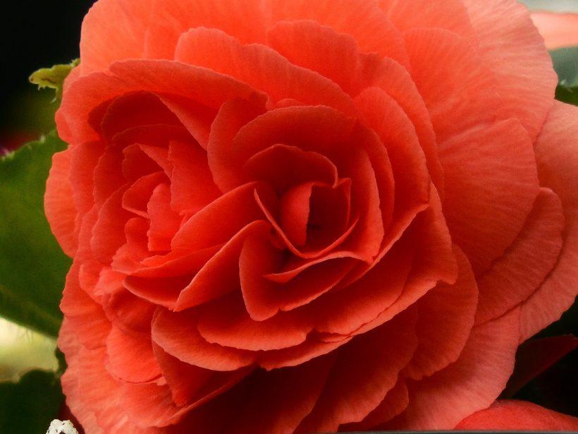 kwiaty, które długo kwitną