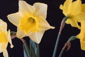 jakie kwiaty sadzić w cieniu