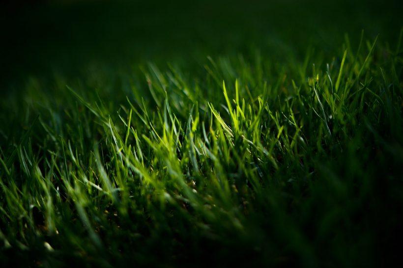 zabezpieczenie trawnika przed chwastami