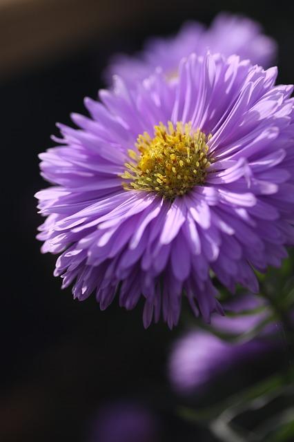 wybór roślin kwitnących jesienią