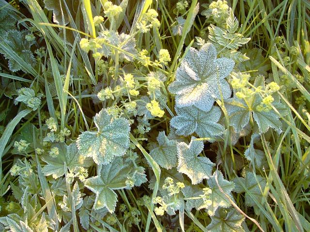 zabezpieczanie roślin przed niskimi temperaturami