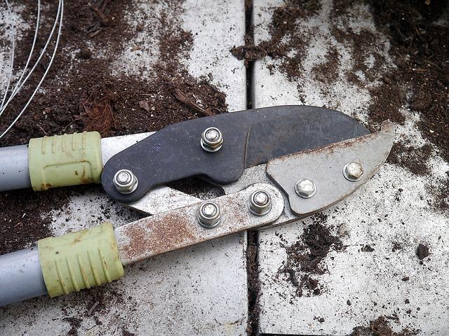 najskuteczniejsze narzędzia tnące do ogrodu