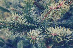 zabezpieczanie roślin zimą