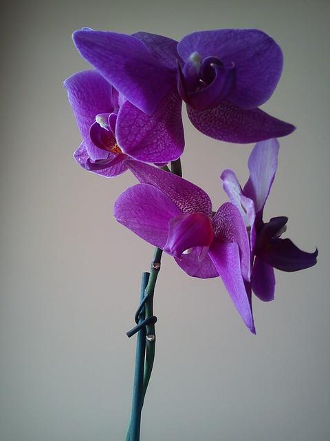 zalety podwiązywania kwiatów