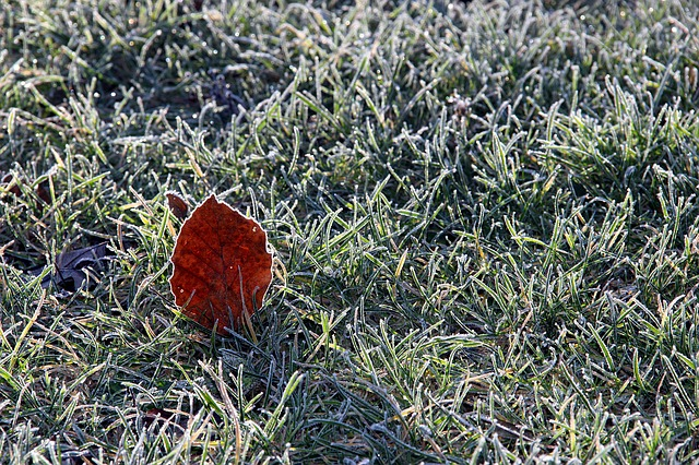 jak dbać o trawnik zimą