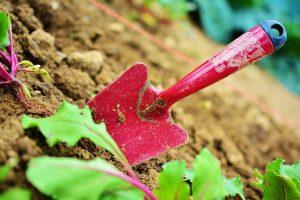 odkwaszanie gleby w ogrodzie