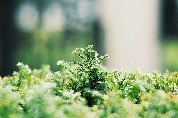 pielęgnacja trawników w ogrodzie