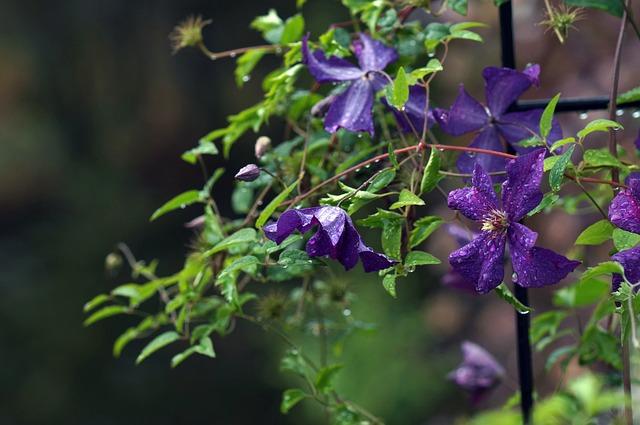 dbanie o kwiaty ogordowe