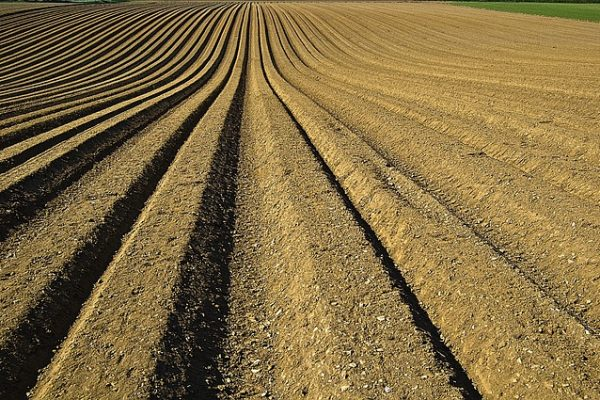 zalety korzystania z zapraw nasiennych